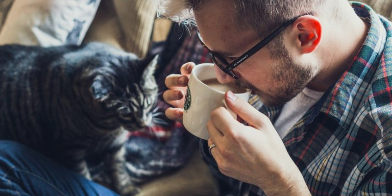 pet friendly apartment rentals allowing dogs and cats